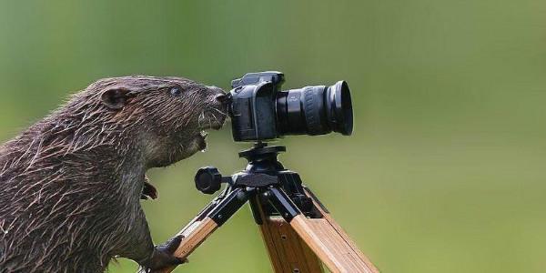 短视频拍摄5大景别及11种运镜手法,新手必备拍摄干货。-大鹏资源网